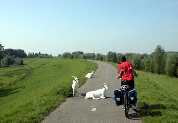 Paved dikes in Holland, ideal for cycling (and goats)